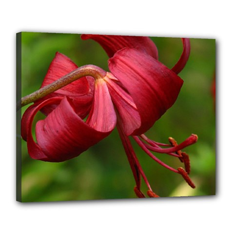 Lilium Red Velvet Canvas 20  X 16  by trendistuff