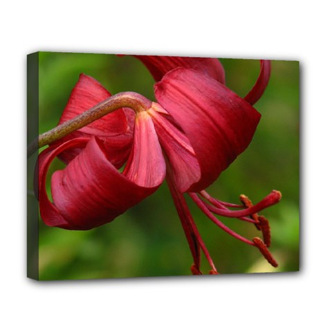 Lilium Red Velvet Deluxe Canvas 20  X 16   by trendistuff