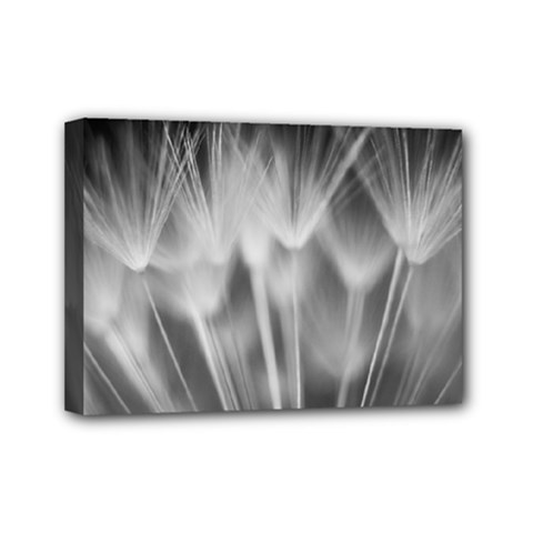 Dandelion Mini Canvas 7  X 5  by trendistuff