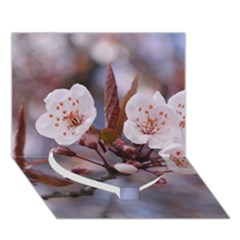 Cherry Blossoms Heart Bottom 3d Greeting Card (7x5)