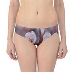 Cherry Blossoms Hipster Bikini Bottoms