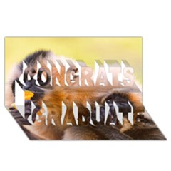 Two Monkeys Congrats Graduate 3d Greeting Card (8x4)  by trendistuff