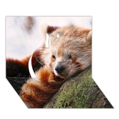 Red Panda Apple 3d Greeting Card (7x5)  by trendistuff