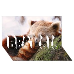 Red Panda Best Sis 3d Greeting Card (8x4)  by trendistuff