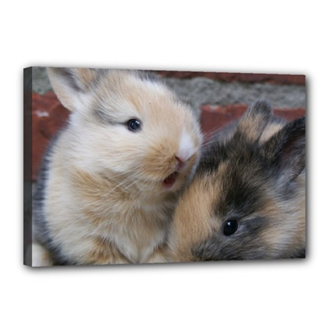 Small Baby Rabbits Canvas 18  X 12  by trendistuff
