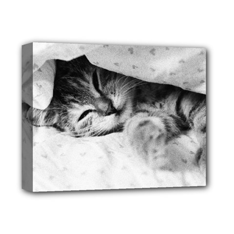 Sleepy Kitty Deluxe Canvas 14  X 11  by trendistuff