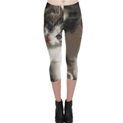 Questioning Kitty Capri Leggings by trendistuff