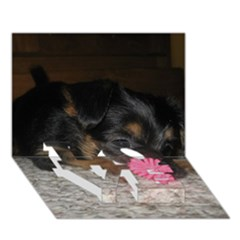 Puppy With A Chew Toy Love Bottom 3d Greeting Card (7x5)