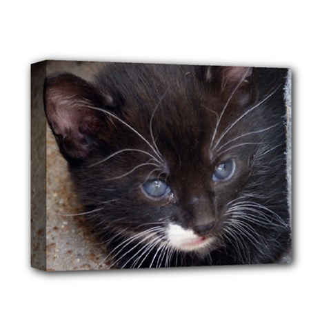 Kitty In A Corner Deluxe Canvas 14  X 11  by trendistuff