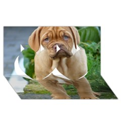 Cute Wrinkly Puppy Twin Hearts 3d Greeting Card (8x4)  by trendistuff
