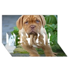 Cute Wrinkly Puppy Best Sis 3d Greeting Card (8x4)  by trendistuff