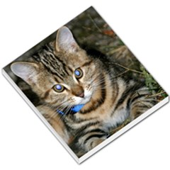 Blue Eyed Kitty Small Memo Pads by trendistuff