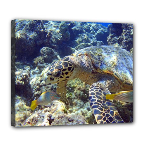 Sea Turtle Deluxe Canvas 24  X 20   by trendistuff