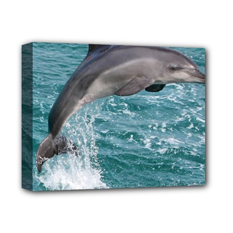Dolphin Deluxe Canvas 14  X 11  by trendistuff