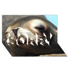 Cute Sea Lion Sorry 3d Greeting Card (8x4)  by trendistuff