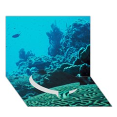 Coral Reefs 2 Circle Bottom 3d Greeting Card (7x5)