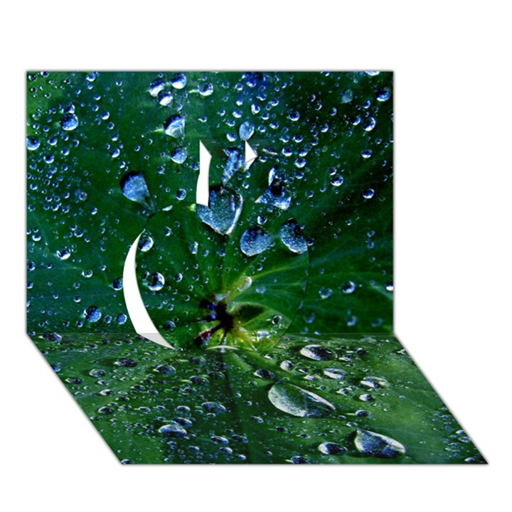 Morning Dew Apple 3D Greeting Card (7x5)