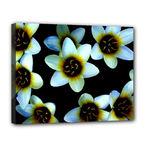 Light Blue Flowers On A Black Background Canvas 14  X 11  by Costasonlineshop