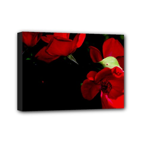 Roses 3 Mini Canvas 7  X 5  by timelessartoncanvas