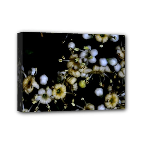 Little White Flowers 2 Mini Canvas 7  X 5  by timelessartoncanvas