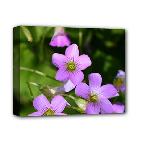 Little Purple Flowers Deluxe Canvas 14  X 11  by timelessartoncanvas