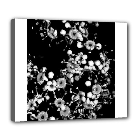 Little Black And White Flowers Deluxe Canvas 24  X 20   by timelessartoncanvas