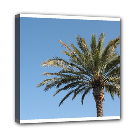 Tropical Palm Tree  Mini Canvas 8  X 8  by BrightVibesDesign