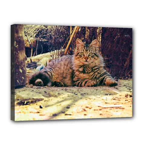 A Big Rural Cat Canvas 16  X 12  by TastefulDesigns