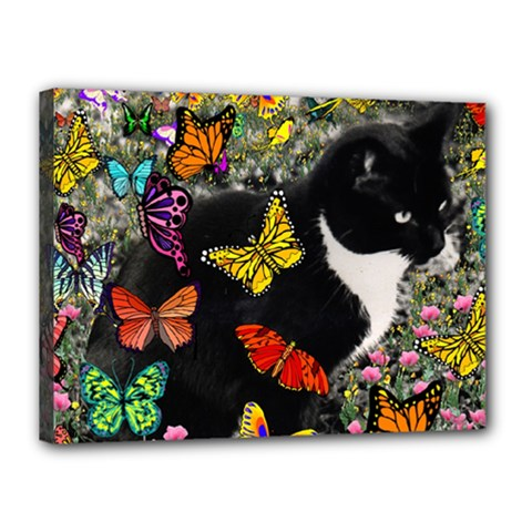 Freckles In Butterflies I, Black White Tux Cat Canvas 16  X 12  by DianeClancy