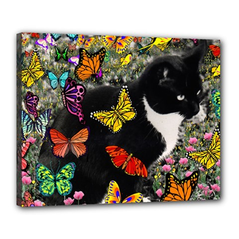 Freckles In Butterflies I, Black White Tux Cat Canvas 20  X 16  by DianeClancy