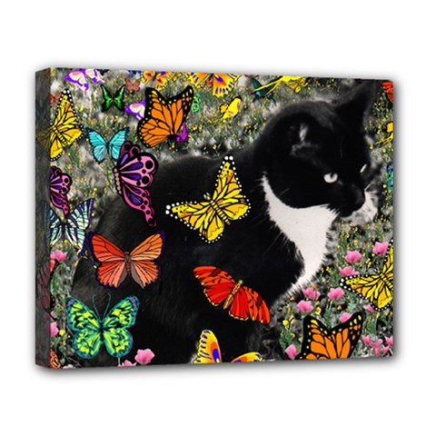 Freckles In Butterflies I, Black White Tux Cat Deluxe Canvas 20  X 16   by DianeClancy