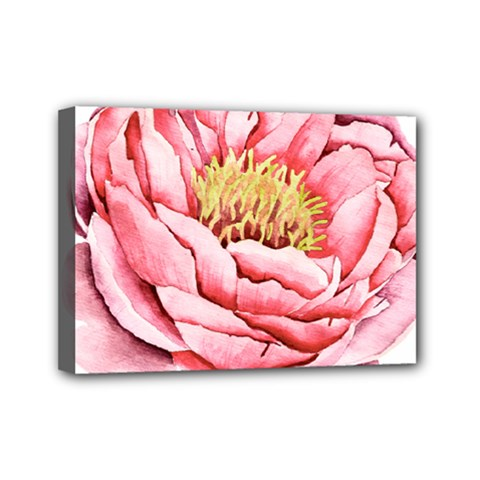 Large Flower Floral Pink Girly Graphic Mini Canvas 7  X 5