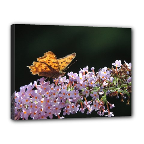 Butterfly Sitting On Flowers Canvas 16  X 12