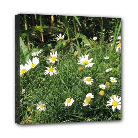 Wild Daisy Summer Flowers Mini Canvas 8  X 8  by picsaspassion