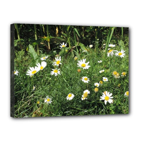 Wild Daisy Summer Flowers Canvas 16  X 12  by picsaspassion