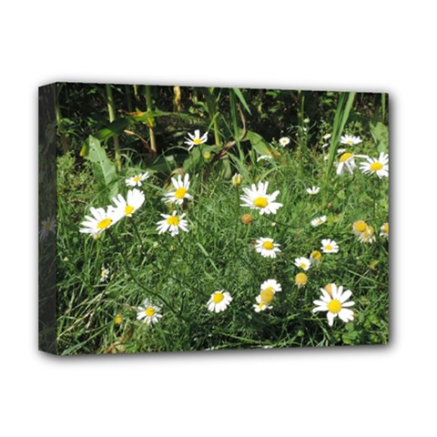 Wild Daisy Summer Flowers Deluxe Canvas 16  X 12   by picsaspassion