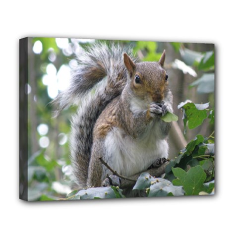 Gray Squirrel Eating Sycamore Seed Deluxe Canvas 20  X 16   by GiftsbyNature