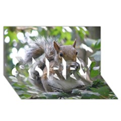 Gray Squirrel Eating Sycamore Seed Sorry 3d Greeting Card (8x4) by GiftsbyNature