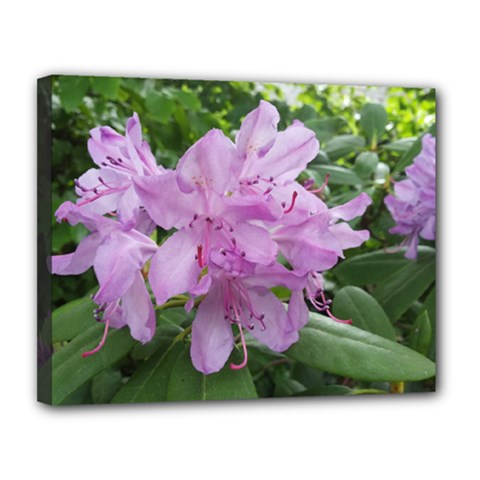 Purple Rhododendron Flower Canvas 14  X 11  by picsaspassion