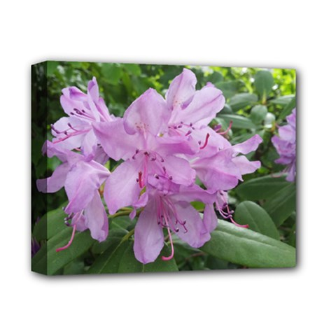 Purple Rhododendron Flower Deluxe Canvas 14  X 11