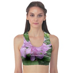 Purple Rhododendron Flower Sports Bra by picsaspassion