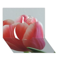 Red   White Tulip Flower Apple 3d Greeting Card (7x5) by picsaspassion
