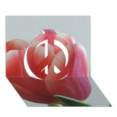 Red   White Tulip Flower Peace Sign 3d Greeting Card (7x5) by picsaspassion