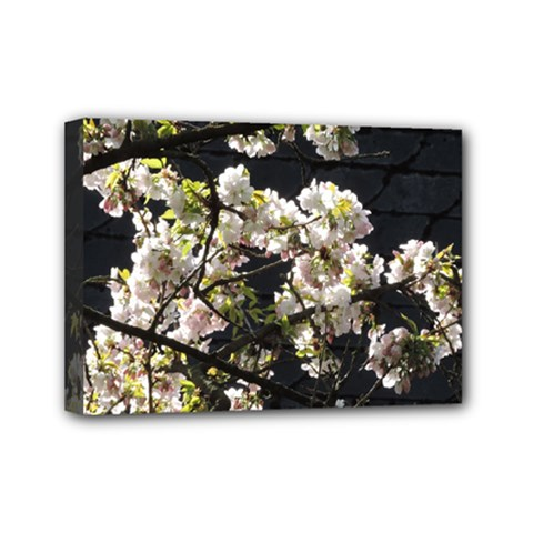 Blooming Japanese Cherry Flowers Mini Canvas 7  X 5  by picsaspassion