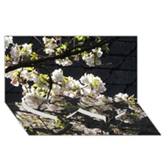 Blooming Japanese Cherry Flowers Twin Heart Bottom 3d Greeting Card (8x4) by picsaspassion