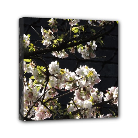 Japanese Cherry Flower Mini Canvas 6  X 6  by picsaspassion
