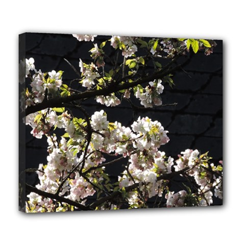 Japanese Cherry Flower Deluxe Canvas 24  X 20   by picsaspassion