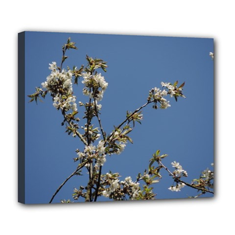 White Cherry Flowers And Blue Sky Deluxe Canvas 24  X 20   by picsaspassion