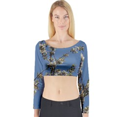 White Cherry Flowers And Blue Sky Long Sleeve Crop Top by picsaspassion