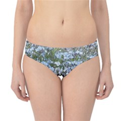 Blue Forget Me Not Flowers Hipster Bikini Bottoms
